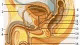 Vụ cắt nhầm bàng quang: bác sĩ nước ngoài điều trị