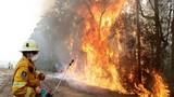 Thảm họa cháy rừng ở Australia: Mất cả 100 năm để phục hồi