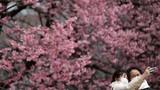 Không khí mùa xuân ngập tràn thế giới thắp hy vọng giữa mùa Covid-19