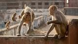 """Hy hữu: Bầy khỉ """"quậy"""" làm sập tường, 5 mẹ con chết thảm"""