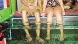 Cá massage có lây truyền bệnh HIV, viêm gan C?