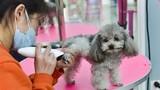 Bên trong khách sạn hạng sang chăm sóc thú cưng dịp Tết