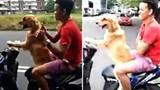 Chó lái xe chở chủ đi chơi gây sốt cộng đồng mạng
