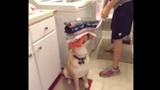 """Chú chó giúp việc khiến ai cũng muốn """"rước về nhà"""""""