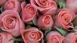 Tìm hiểu tính cách qua loài hoa yêu thích