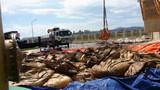 Ảnh: Cảnh chất thải công nghiệp đóng gói ngập tràn Formosa