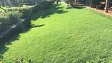 Mảnh ruộng trồng cỏ cho nhà giàu: Mỗi năm 500 triệu