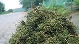 Đặc sản núi rừng ven đường xứ Nghệ