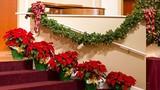 Mẹo phong thủy nhà ở cho mùa Noel an lành, sung túc