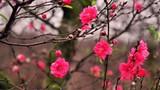 Tết Đinh Dậu 2017: Bày cây gì trong nhà để rinh tài rước lộc?