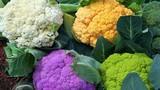 Loạt rau củ sặc sỡ hợp trồng trong nhà để đón Xuân
