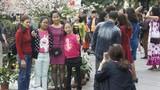 Lễ hội hoa anh đào HN: Anh đào Nhật kém sắc so với…hoa mận?