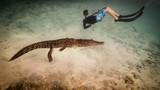 Mỹ: Cậu bé 14 tuổi bơi cùng bầy cá sấu hoang trong rừng