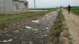 Hà Nam: Dân khốn khổ vì xác lợn ngập tràn ngõ xóm