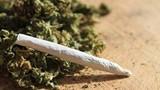 3 thanh niên suýt chết vì ngộ độc cỏ Mỹ