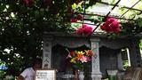 """""""Soái ca"""" U80 dựng cả khu vườn tình yêu bên mộ vợ"""