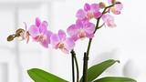 Mang tài lộc vào nhà nhờ những loài hoa quen thuộc sau