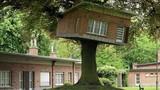"""Những ngôi nhà """"lơ lửng"""" trên cây khiến dân mạng thích thú"""