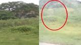 Xôn xao ma xuất hiện gần Kho xăng dầu Hải Phòng
