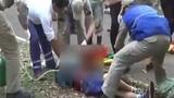 Vào công viên trêu hổ dữ, bé trai bị cắn nát tay