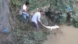 Ngỡ ngàng dùng điện đánh được cá sấu