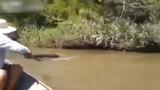 Cận cảnh bắt trăn khổng lồ bơi dưới nước