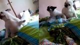 Hai chú chó nhảy siêu hài theo tiếng nhạc