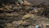 Triệt phá đường dây săn bắt rùa biển cực lớn