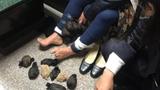 Bắt quả tang người phụ nữ giấu 24 con chuột nhảy trong váy