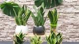5 loại cây đặt trong nhà chẳng khác nào điều hòa, giúp hạ nhiệt tới 10 độ mà không mất đồng nào