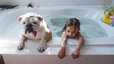 Xúc động tình cảm giữa cô chủ nhỏ với cún cưng