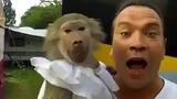 Khỉ con bắt chước tiếng gào thét giống hệt ông chủ