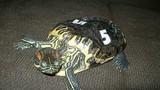 Cuộc đời u ám của con rùa sống 20 năm trong tối