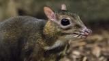 Sự thật kinh ngạc về loài có răng nanh ma cà rồng