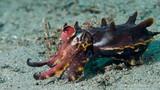 Sự thật đầy màu sắc về loài mực nang