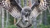 Những khám phá thú vị khó tin nổi về loài chim cú