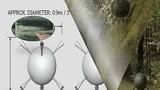 Nhân viên kiểm lâm kể giây phút bị vật thể nghi UFO tấn công