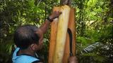 Bất ngờ những loài cây ngư dân Việt hay dùng bắt cá