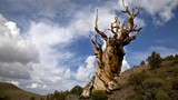 Những sinh vật sống lâu đời nhất Trái Đất và nơi tìm ra chúng