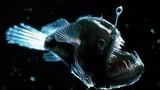 Rùng mình trước 10 loài thủy quái phát sáng đáng sợ nhất đại dương