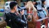 """Hình ảnh loài ngựa mới """"nhập ngũ"""" đoàn kỵ binh của CSCĐ tung vó thảo nguyên"""