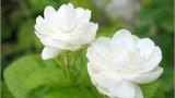 Thanh nhã cháo từ các loài hoa giúp làm đẹp da