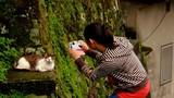 Tới ngôi làng của những chú mèo đáng yêu ở Đài Loan
