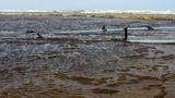 Nước biển khu Dung Quất có màu cà phê: Nồng độ pH vượt mức cho phép