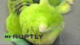 Lạ lùng mèo có bộ lông mầu xanh lá