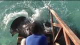 Lạ lùng cá đuối gai độc nũng nịu đòi ăn