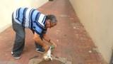 Giải cứu mèo bị kẹt đầu trong lon nước ngọt