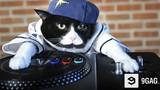 Xem mèo xinh chơi nhạc DJ cực ngầu