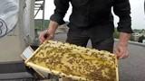 Quy trình làm mật của ong ít người biết