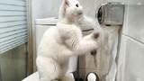 """Video: Chú mèo """"lịch sự"""" nhất hệ mặt trời"""